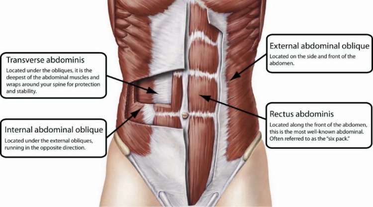 Core-Abdominal-Muscles